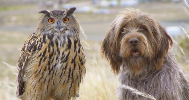 Watch Unlikely Animal Friends | Natgeo Wild
